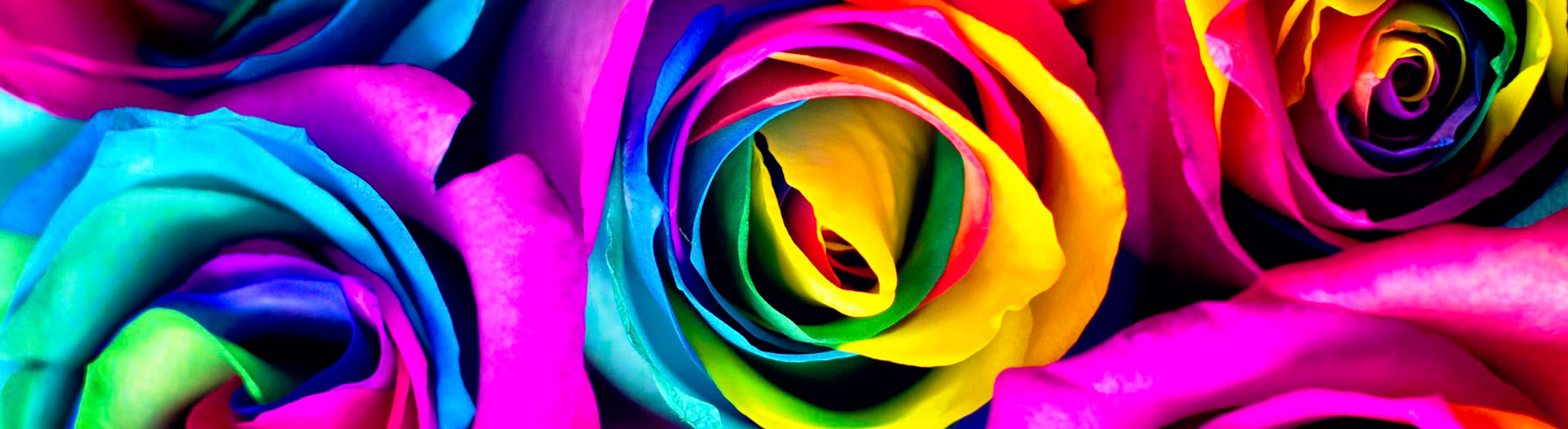 rosas tinturadas